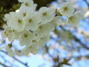 Lentewandeling bloesem