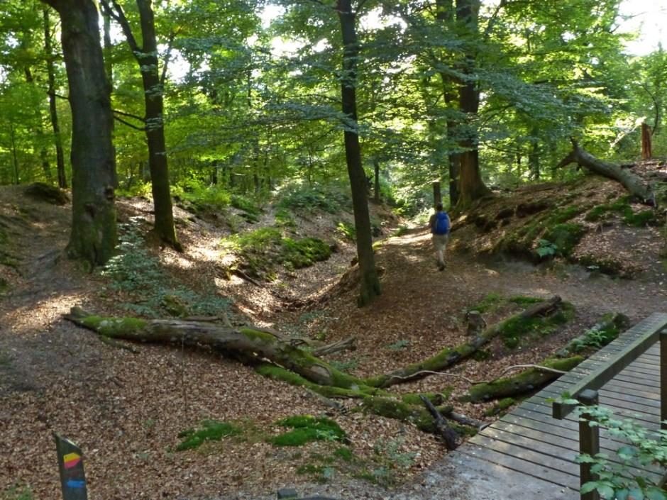 Wandeling in de bossen bij Wolfheze (10 km)
