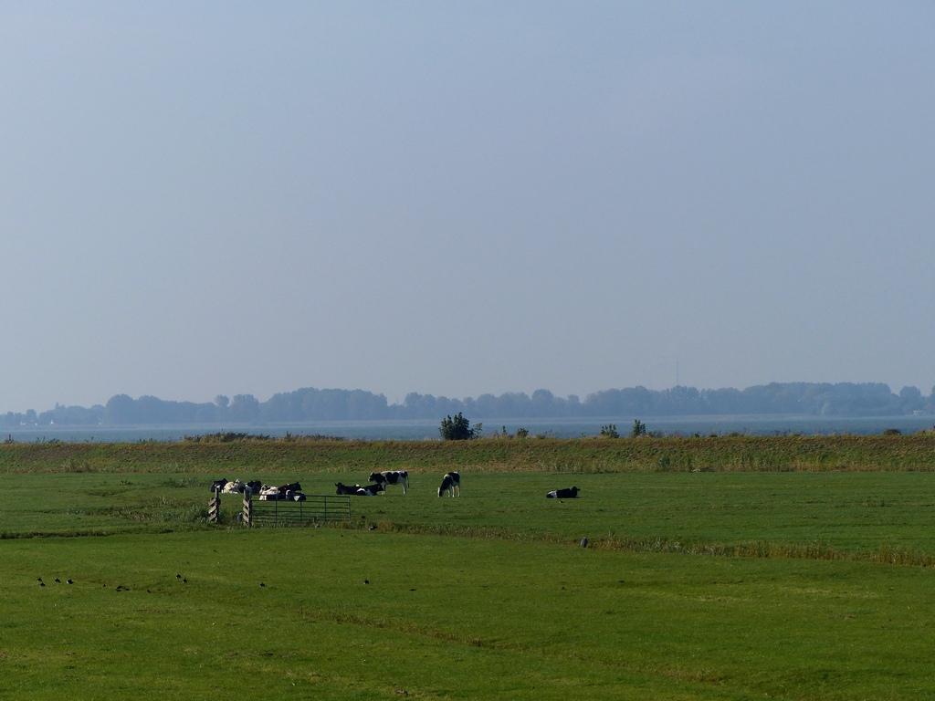 koeien-marken