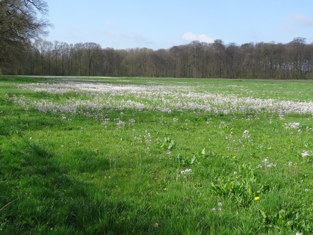 Pinksterbloemen in het veld - Klompenpad Stoetwegenpad