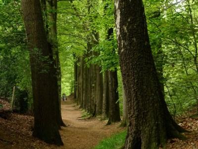 N70 wandeling Gelderland
