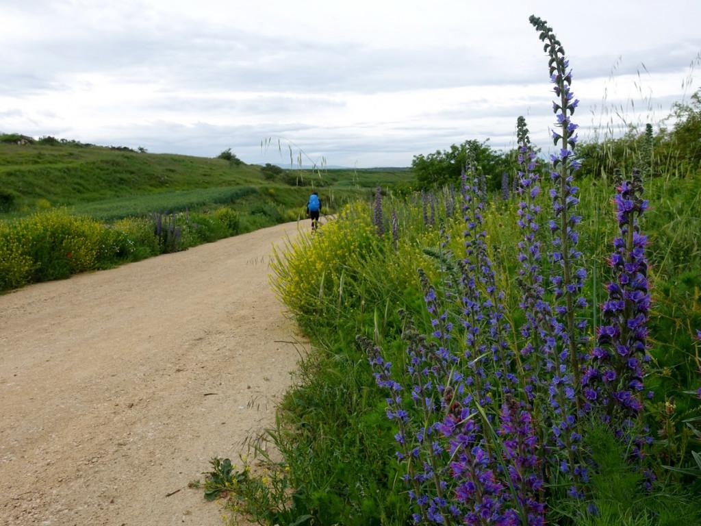 Bloemen langs de camino
