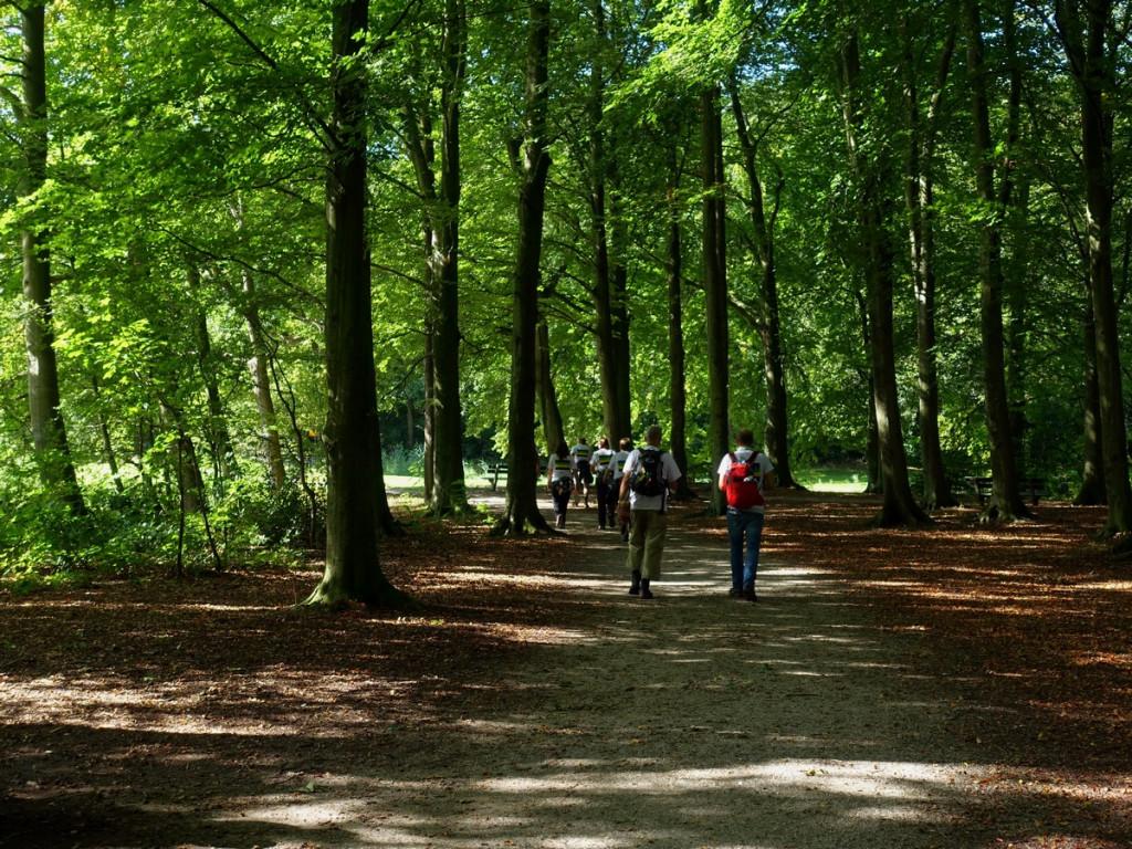 10 Door het Haagse bos wandelen