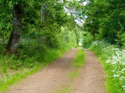 Brede bosweg in Duitsland