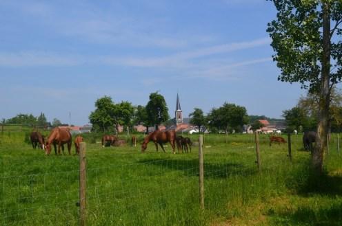 Wandelen in Sint-Truiden 22-5-2019 056