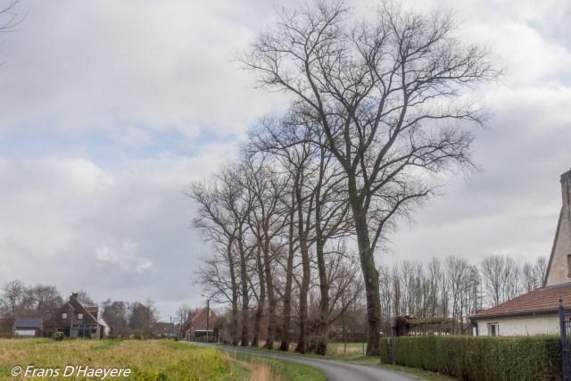 2020-02-26 Moerkerke (32)