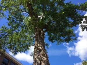 Deze boom moet worden gekapt