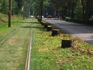 Gekapte bomen naaast de rails