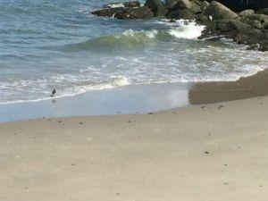 Strandje bij zuidelijk havendam