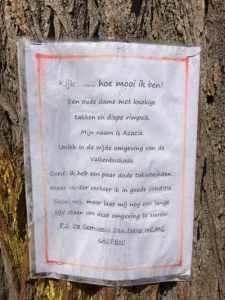 Tekst over snoeien boom Valkenboskade