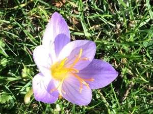 Narcis in september