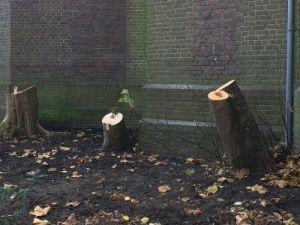 Afgekapte bomen