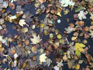 Bladeren op asfalt