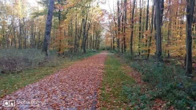 Herfst in Flevoland