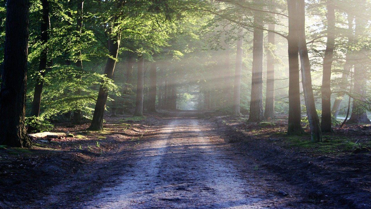 Op zoek naar een leuke boswandelingen? Op deze pagina vind je verschillende routes in België. Lees snel verder.