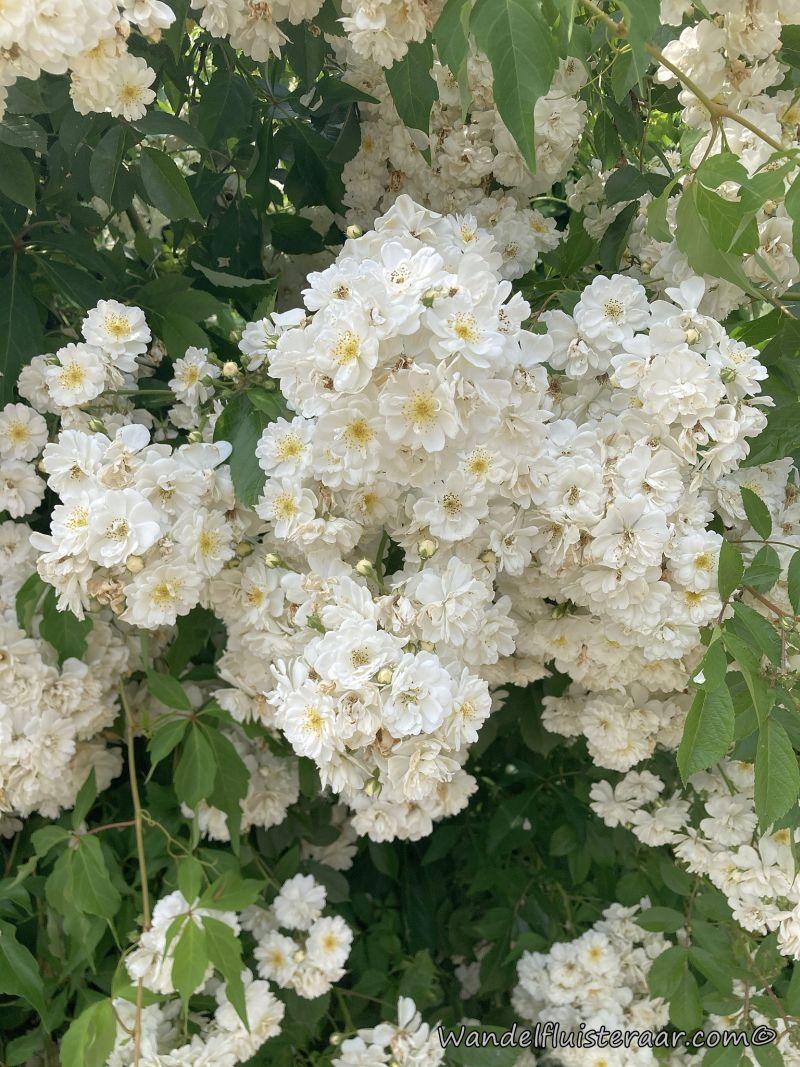 Prachtige bloemen tijdens mijn wandeling in Bever