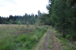 Drents Friese Wold (12)