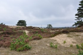 Aekingerzand - Drents Friese Wold