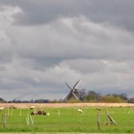 Groningen: Kardinge