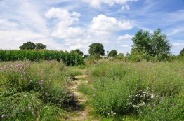 Drenthe: Zeyen 15 KM