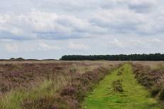 Zeijen Noordsche veld
