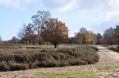 Veluwe Ermelose Heide