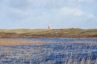 Texel - Mandevallei