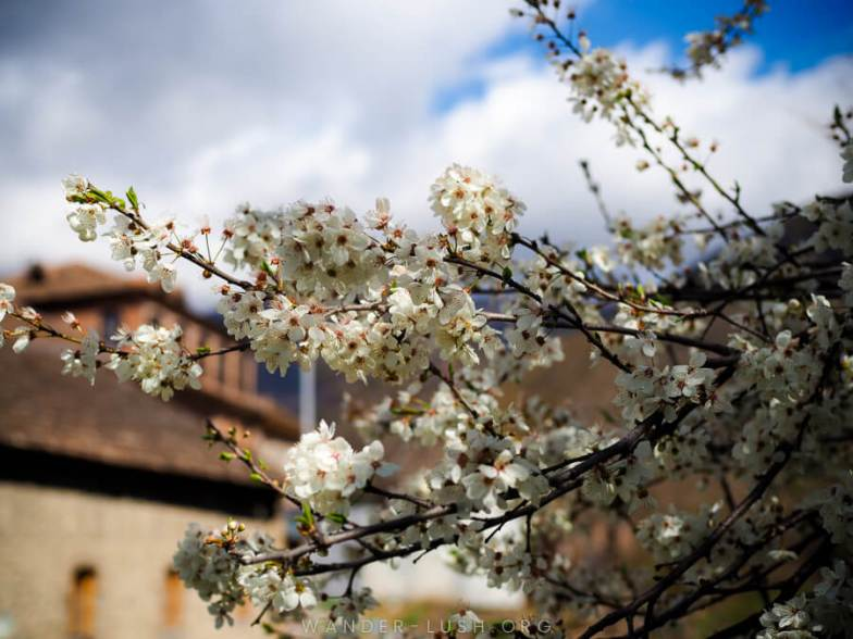 Sheki Azerbaijan has so much to offer. From painted palaces to decadent desserts, hip bars to handicrafts, here are 11 things I loved most about Sheki!   © Emily Lush 2017