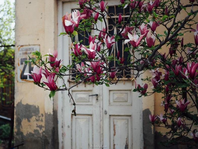 © Emily Lush 2018 | Things to do in Sighnaghi