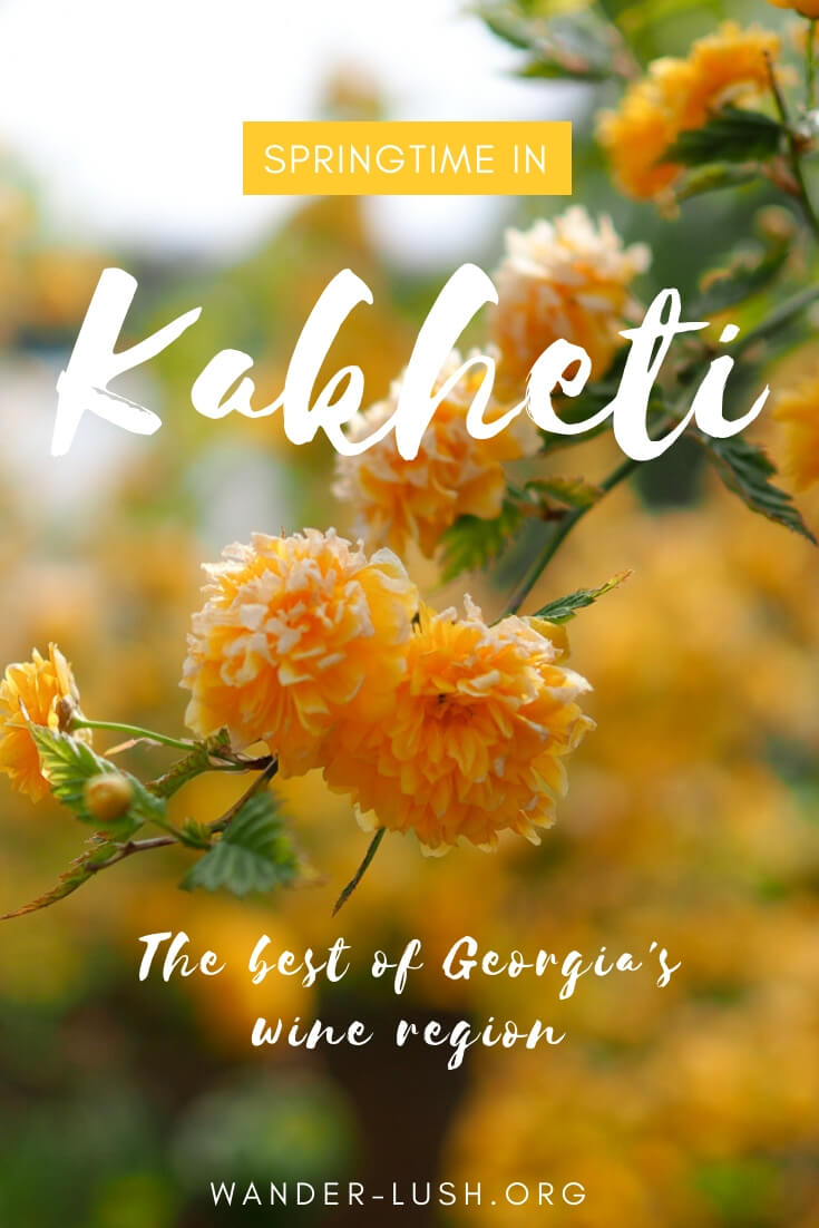 Whether you're an aspiring sommelier or an unapologetic beer drinker, raising a glass in Kakheti, Georgia's premier wine region, is just one of those things you have to do. This complete guide to Kakheti, Georgia includes things to do in Sighnaghi and Telavi, transport, accommodation, food, and much more.