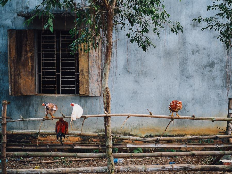 Looking for a homestay in Hanoi, Vietnam? Uncle Ty's Farmstay, located just outside Hanoi in Hoa Binh Province, is the perfect place to escape the city for a night or two. Here's everything you need to know to plan your visit. | © Emily Lush 2017