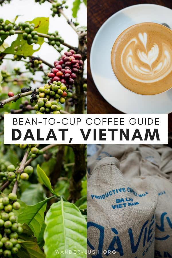 Love coffee? Love food? Then you'll adore Dalat, Vietnam's coffee capital and rising culinary star. Here is my selection of the very best cafes in Dalat for coffee and food—plus a few recommendations for gastronomy-themed activities.