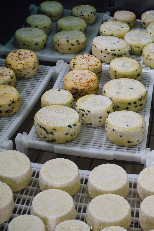 Rounds of goat cheese in a refrigerator.