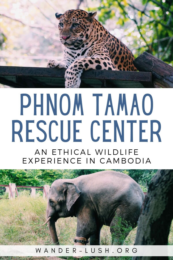 What it's really like to visit Phnom Tamao Wildlife Rescue Center and do the Free the Bears 'Bear Care' tour in Phnom Penh, Cambodia.