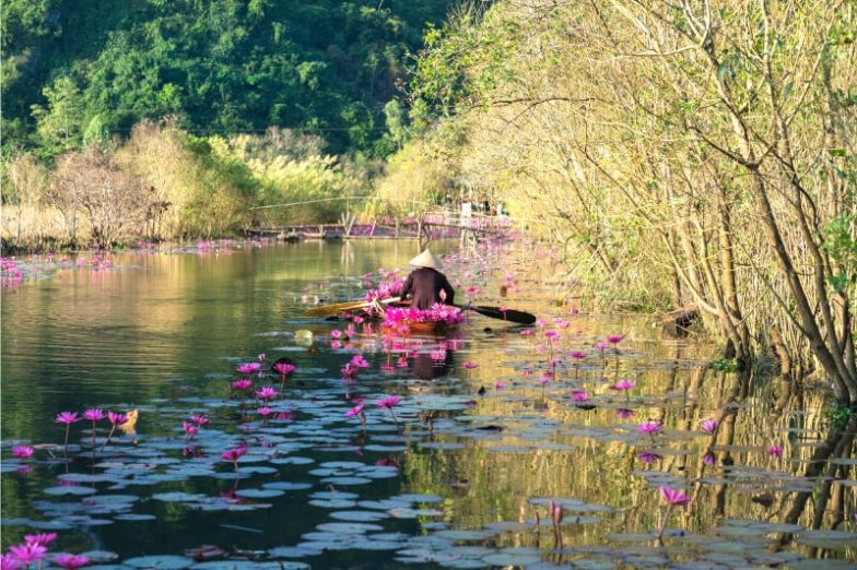 A woman in a conical hat paddles a sampan boat along a river with pink lotus flowers.
