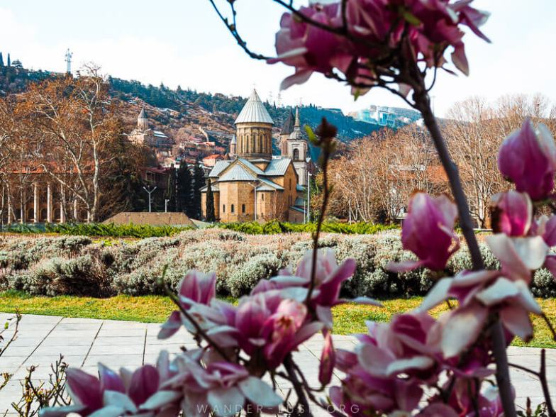 A stone church surrounded by pink magnolia blooms in Tbilisi, Georgia.