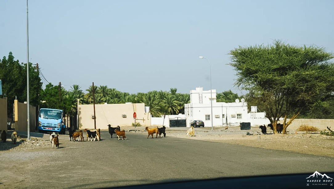 how-to-drive-roadtrip-in-oman-2