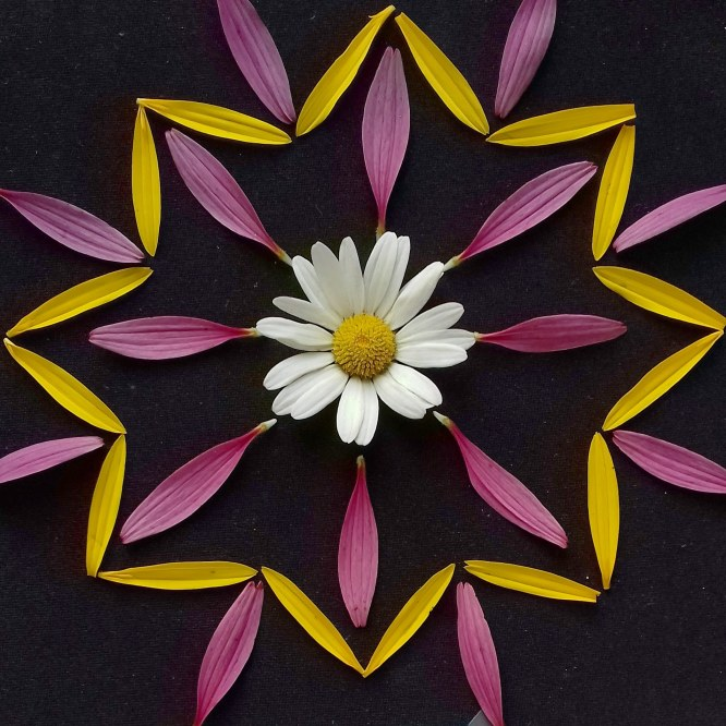 10 things I learnt from making 100 nature mandalas in 100 days