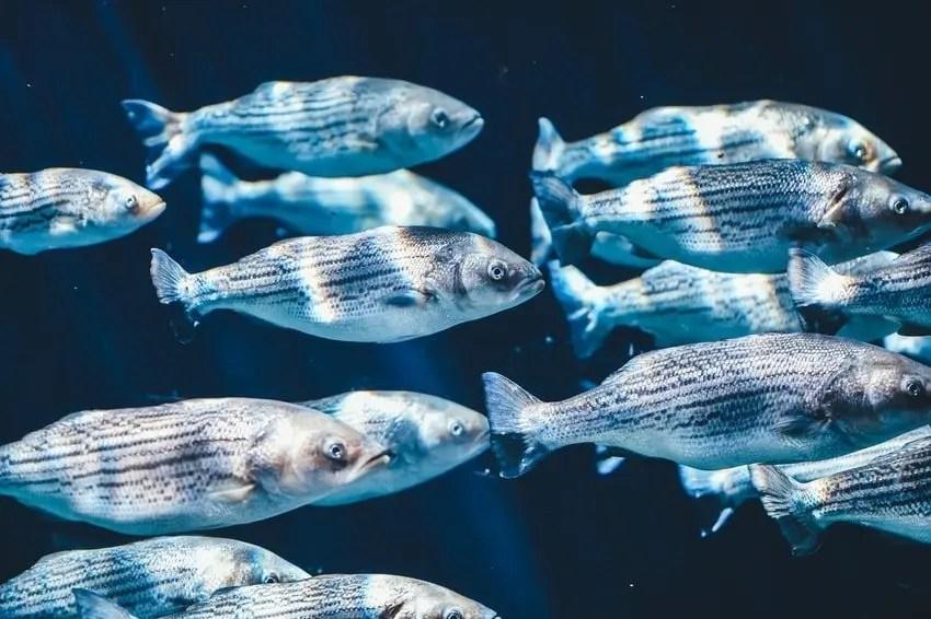 Silver Fish Aquarium