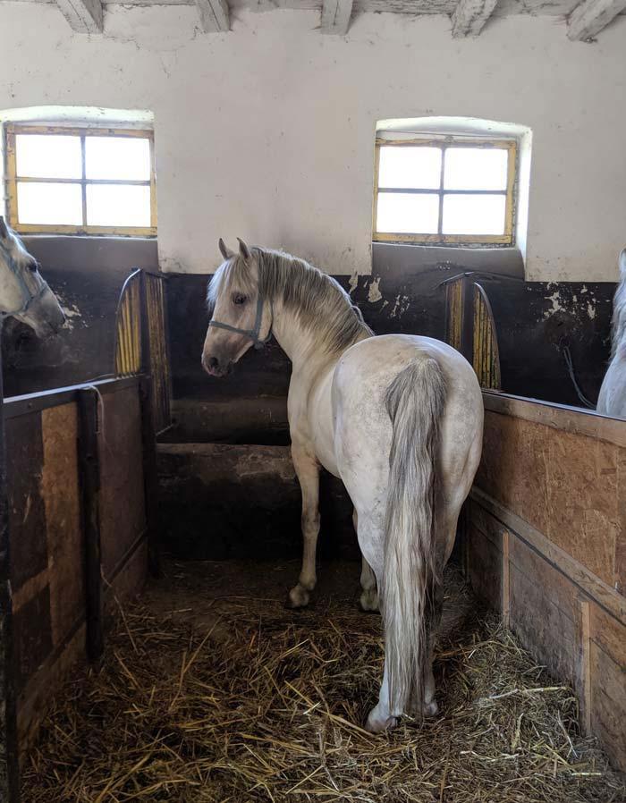 Wb romania horse farm