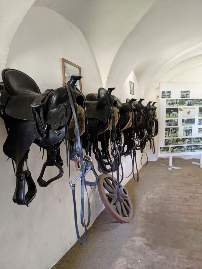 Wb romania horse farm 26