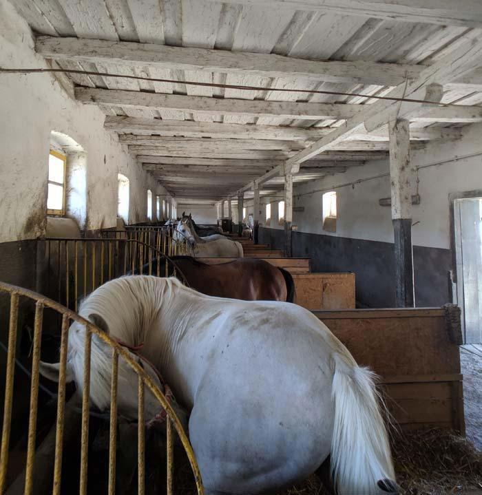 Wb romania horse farm 7