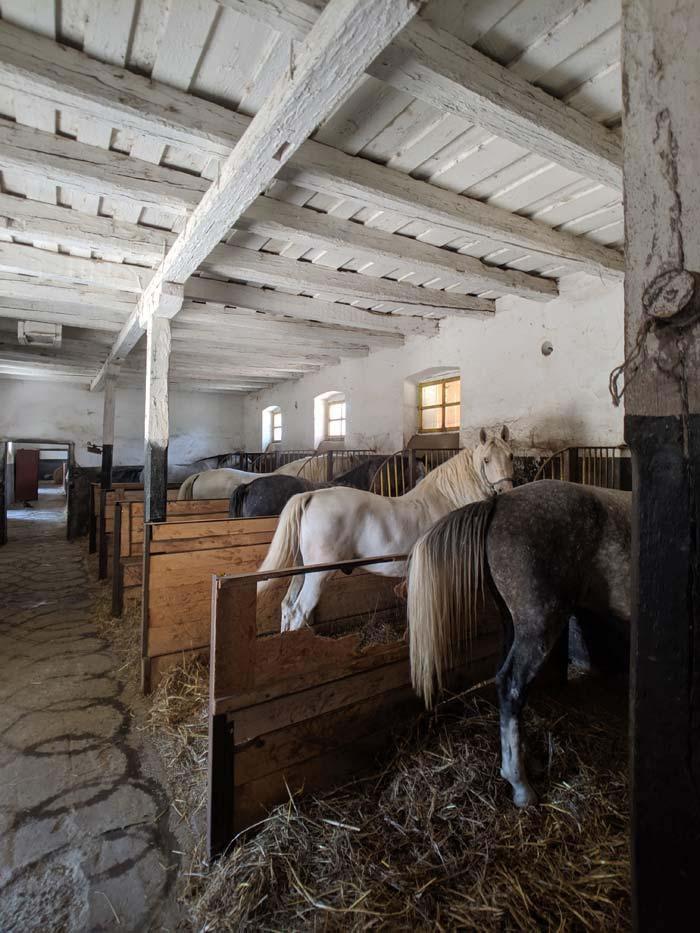 Wb romania horse farm 88