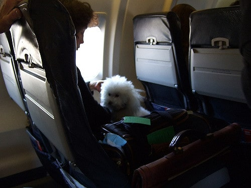 How To Travel with a Dog on a Plane