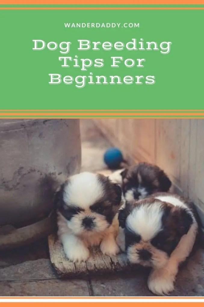 Dog Breeding Tips For Beginners