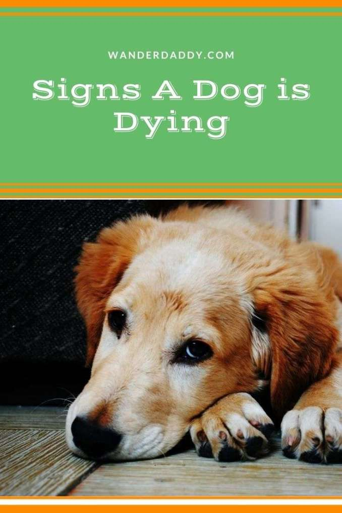 Signs A Dog is Dying