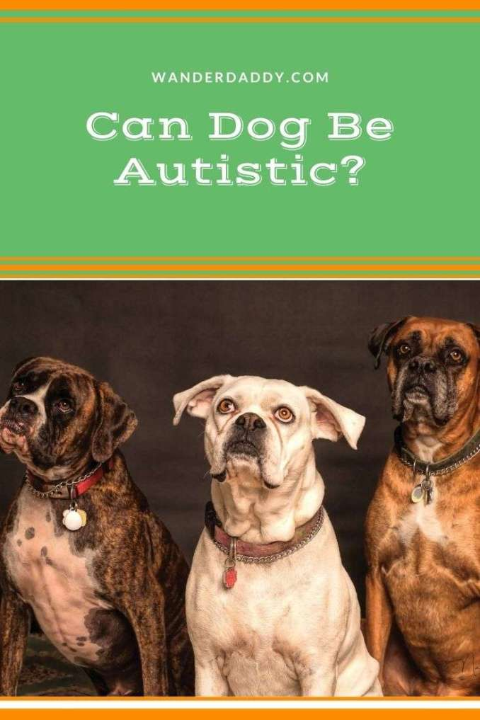 Can Dog Be Autistic
