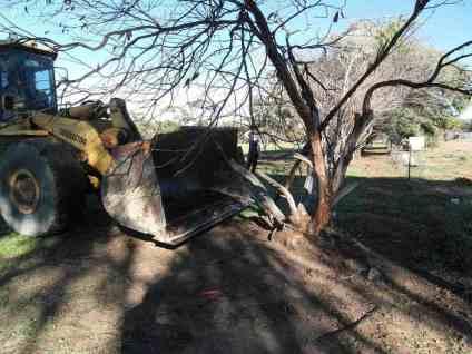 Kette von Bagger zu Baum. Wir reissen den Baum aus