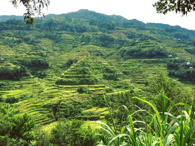 From one of the viewpoints at Banaue, Ifugao.