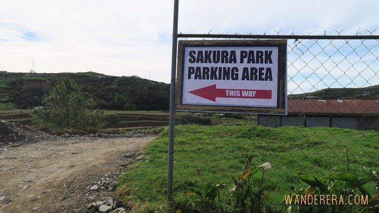 Sakura Park in Atok